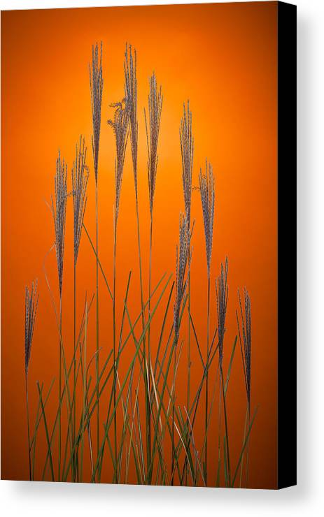 Grass Canvas Print featuring the photograph Fountain Grass In Orange by Steve Gadomski