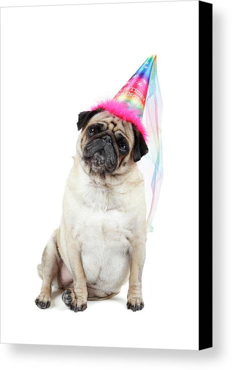 Vertical Canvas Print featuring the photograph Happy Birthday by Mlorenzphotography