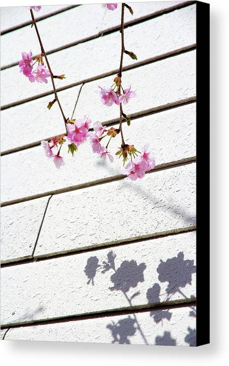 Vertical Canvas Print featuring the photograph Kawadu Sakura by Privacy Policy