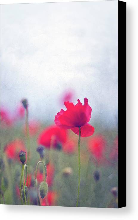 Vertical Canvas Print featuring the photograph Scarlet Poppies In Painterly Style by Image by Catherine MacBride