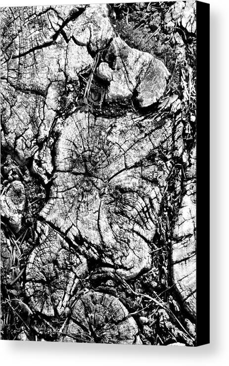 Tree Stump Canvas Print featuring the photograph Stumped by Mike McGlothlen