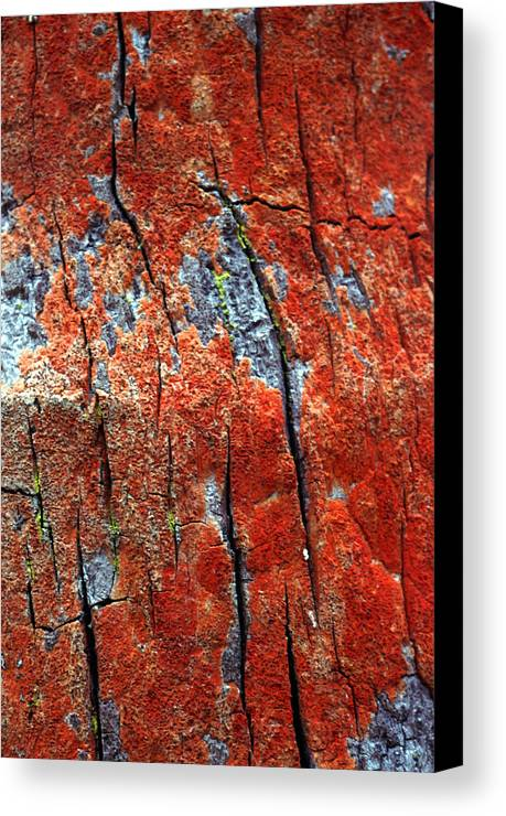 Vertical Canvas Print featuring the photograph Tree Bark by John Foxx