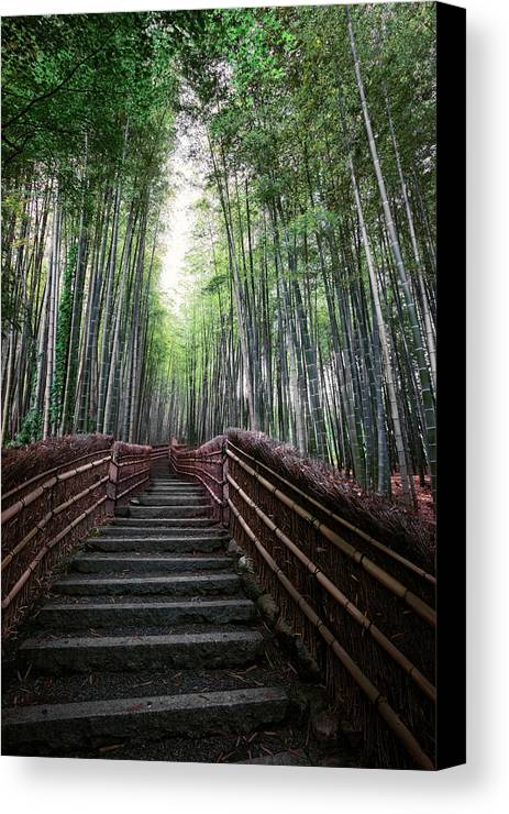 Bamboo Canvas Print featuring the photograph Bamboo Forest Of Japan by Daniel Hagerman
