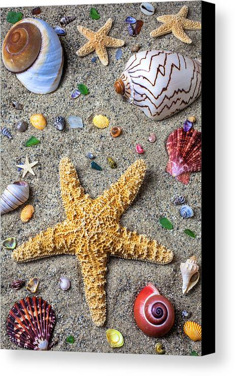 Starfish Canvas Print featuring the photograph Day At The Beach by Garry Gay