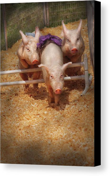 Pig Canvas Print featuring the photograph Farm - Pig - Getting Past Hurdles by Mike Savad