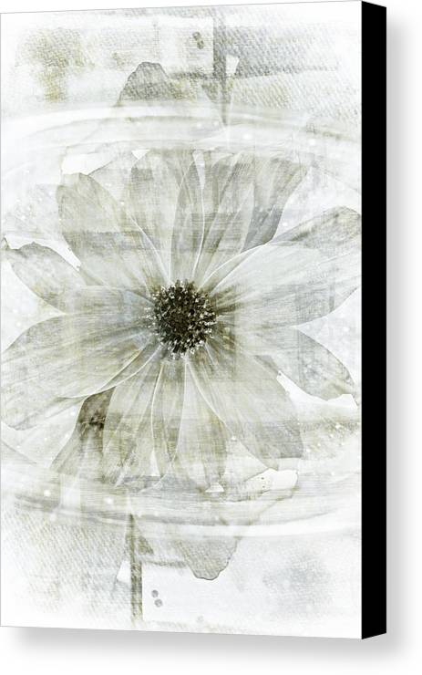 Flower Reflection Floral Garden Water Gardens Zen Painting Paintings Botanical Still Life Gardening Flowers Design Graphic Graphical Designs Contemporary Modern Art Abstract Florals Flowering Spring Summer Psychedelic Psychedelia Dreamy Dream Pretty Beautiful Black And White Abstracts Green Nature Organic Vintage Retro Style Antique Lotus Asian Asia Japanese Chinese Moody Mood Moods Botany Botanic Rain Rainy Day Deco Decor Decorative Light Texture Textured Monochrome Sepia Bright Pale Pond Lake Canvas Print featuring the painting Flower Reflection by Frank Tschakert