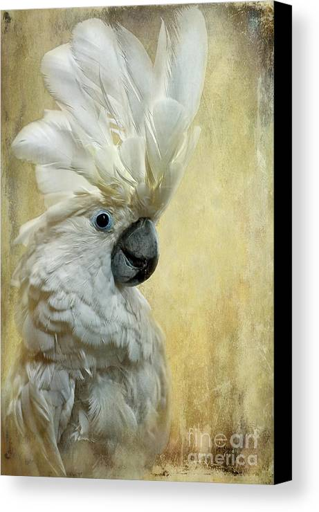 Cockatoo Canvas Print featuring the photograph Glamour Girl by Lois Bryan