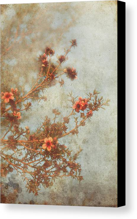 Flowers Canvas Print featuring the photograph Love Is In Bloom by Laurie Search