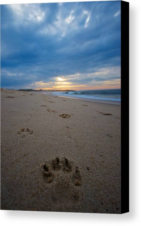 Beach Canvas Print featuring the photograph Pawprints by Mike Horvath