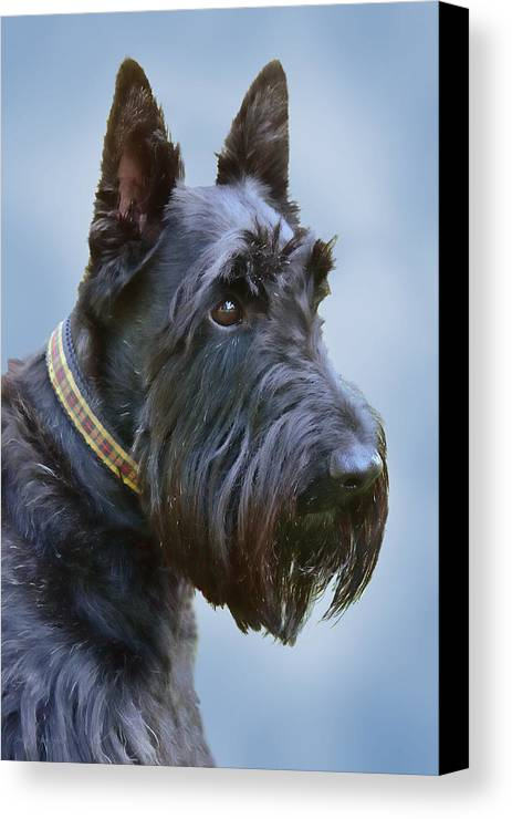 Scottish Terrier Canvas Print featuring the photograph Scottish Terrier Dog by Jennie Marie Schell