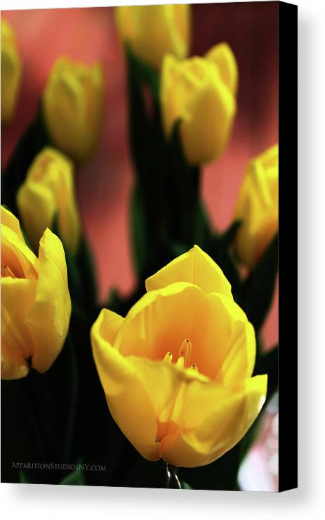 Tulips Canvas Print featuring the photograph Tulips by Matt Truiano