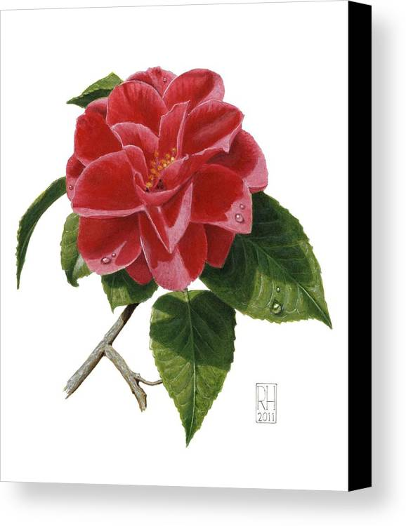 Camellia Canvas Print featuring the painting Camellia by Richard Harpum
