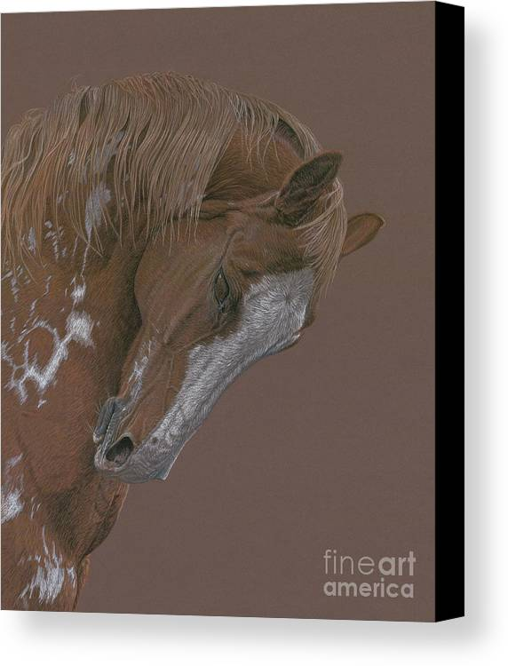 Horse Canvas Print featuring the drawing Rune by Laura Klassen