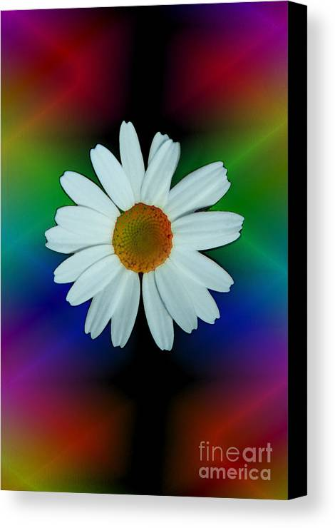 Abstract Canvas Print featuring the photograph Daisy Bloom In Neon Rainbow Lights by ImagesAsArt Photos And Graphics