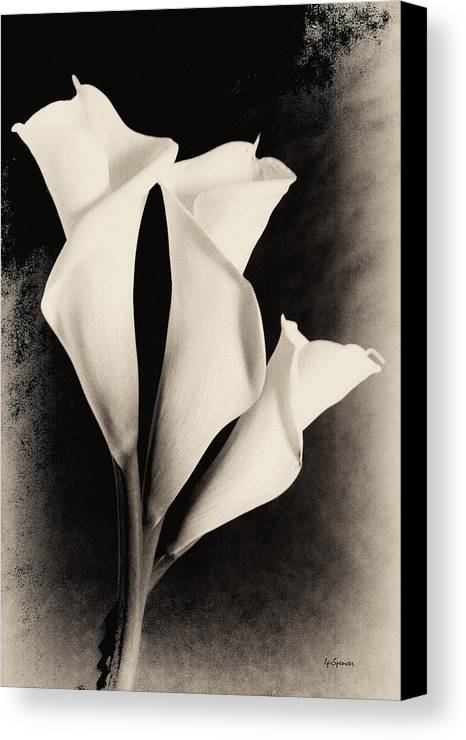 Floral Canvas Print featuring the photograph Three Calla Lilies by Lisa Spencer