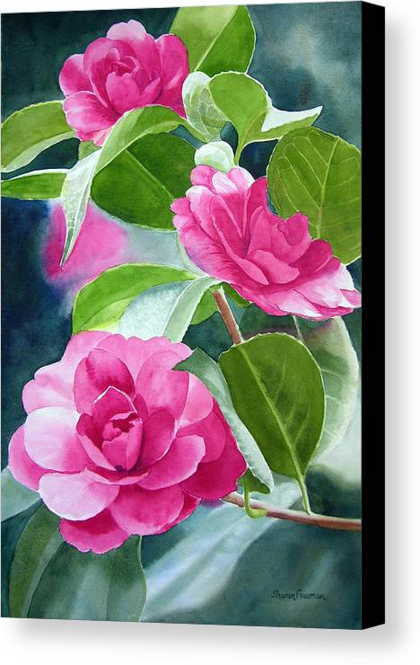 Pink Camellia Canvas Print featuring the painting Bright Rose-colored Camellias by Sharon Freeman