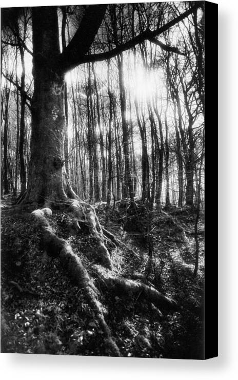 Vale; Legendary; Wood; Woods; Woodland; Landscape; Rural; Countryside; Magical; Mysterious; Fairytale; Bare Trees; Atmospheric; Dramatic; Eerie; Spooky; French; Moonlight; Moonlit Canvas Print featuring the photograph Trees At The Entrance To The Valley Of No Return by Simon Marsden