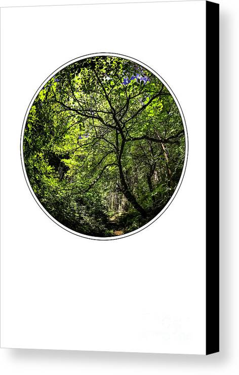 Floral Canvas Print featuring the photograph Tree Of Life by Holly Martin