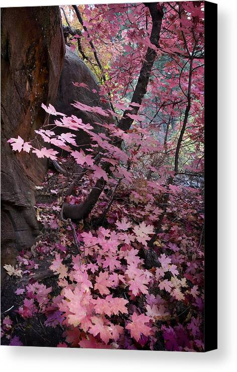 West Canvas Print featuring the photograph West Fork Fall Colors by Dave Dilli