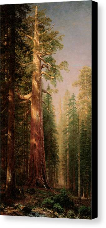 Albert Bierstadt Canvas Print featuring the painting The Great Trees Mariposa Grove California by Albert Bierstadt