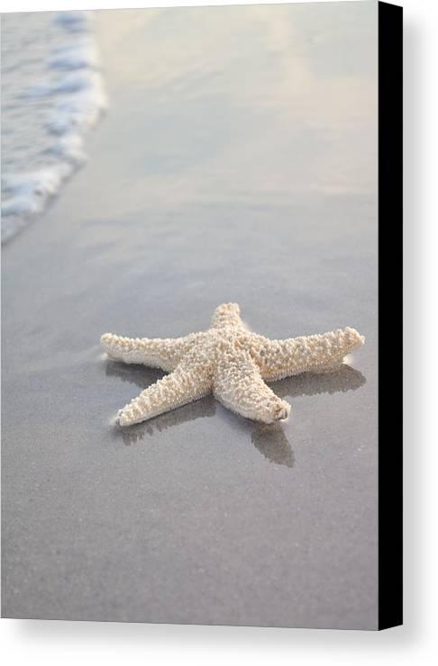 Beach Canvas Print featuring the photograph Sea Star by Samantha Leonetti