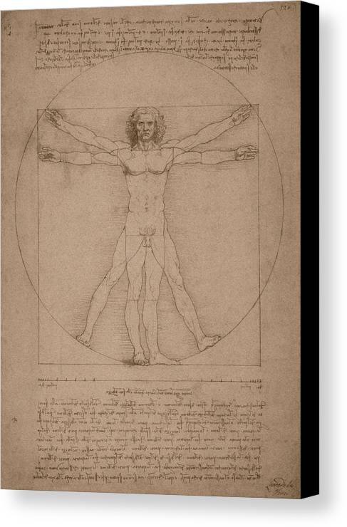 Leonardo Da Vinci Canvas Print featuring the drawing Vitruvian Man by War Is Hell Store