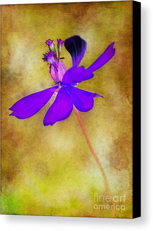Flower Canvas Print featuring the photograph Flower Take Flight by Judi Bagwell