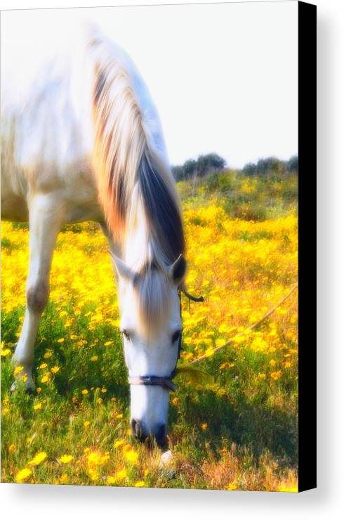 Animal Canvas Print featuring the photograph Mirage by Stelios Kleanthous