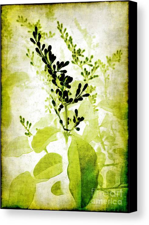 Leaves Canvas Print featuring the photograph Study In Green by Judi Bagwell