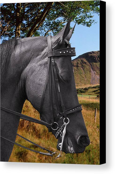 Horses Canvas Print featuring the photograph The Horse - God's Gift To Man by Christine Till