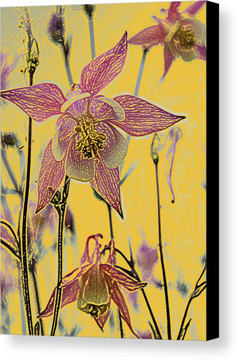 Columbine Canvas Print featuring the photograph Columbine by Michael Peychich