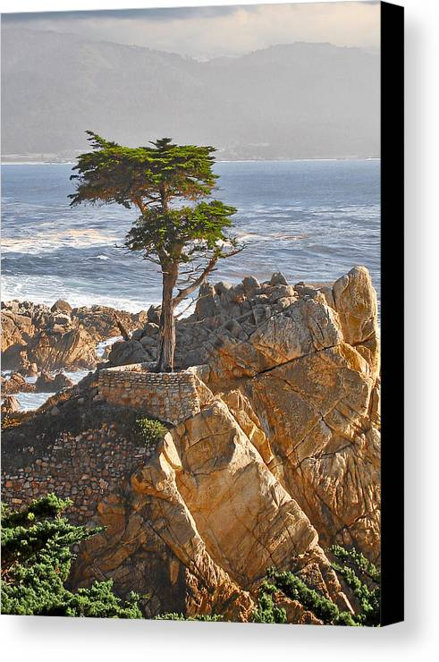 Pine Canvas Print featuring the photograph Lone Cypress - The Icon Of Pebble Beach California by Christine Till