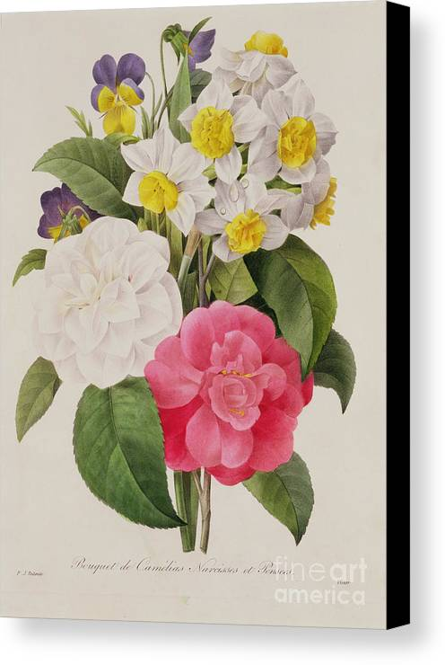 Camellia Canvas Print featuring the painting Camellias Narcissus And Pansies by Pierre Joseph Redoute