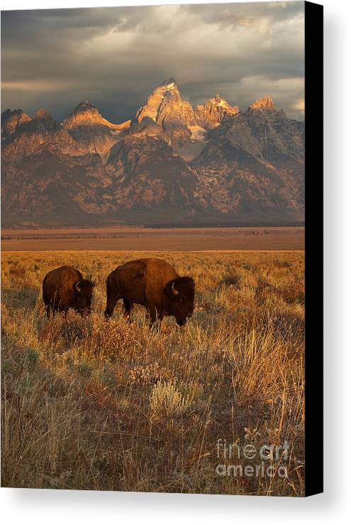 Grand Teton Canvas Print featuring the photograph Morning Travels In Grand Teton by Sandra Bronstein