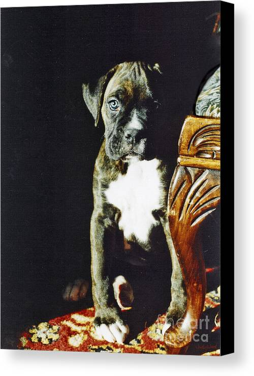 Boxer Dog Canvas Print featuring the digital art New To The World by Judy Wood
