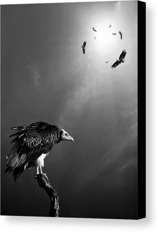Vulture Canvas Print featuring the photograph Conceptual - Vultures Awaiting by Johan Swanepoel