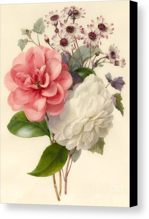 Flower; Camellia Canvas Print featuring the painting Spray Of Three Flowers by Marie Anne