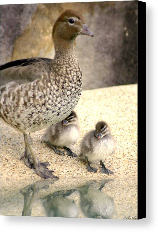 Animals Canvas Print featuring the photograph Mother Of Twins by Holly Kempe
