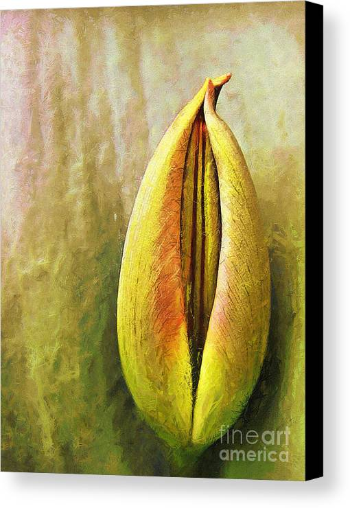 Canvas Print featuring the painting Tulip by Odon Czintos