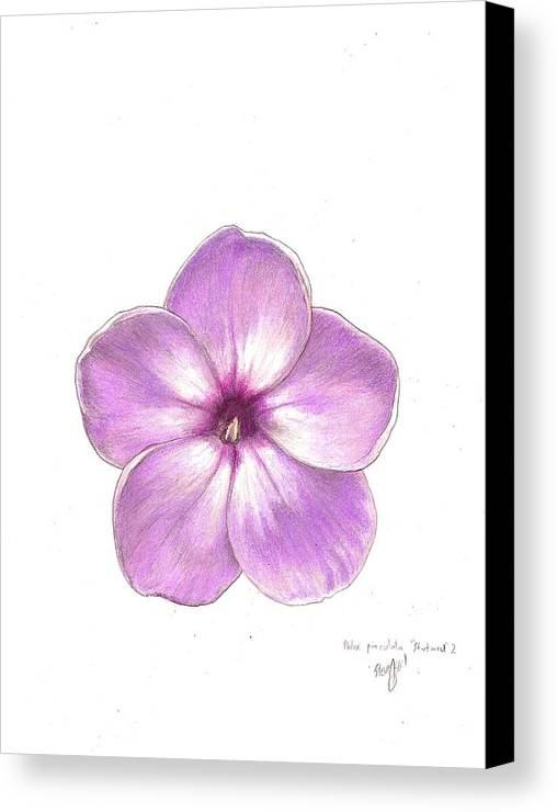 Phlox Canvas Print featuring the drawing Shortwood Phlox 2 by Steve Asbell