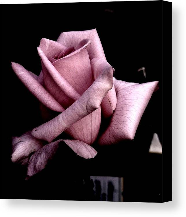 Rose Flower Canvas Print featuring the photograph Mauve Flower by Mohammed Nasir