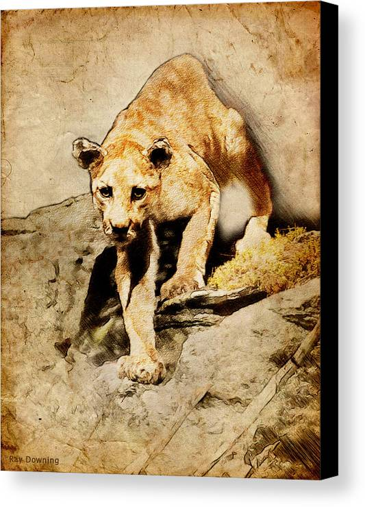 Puma Canvas Print featuring the digital art Cougar Hunting by Ray Downing