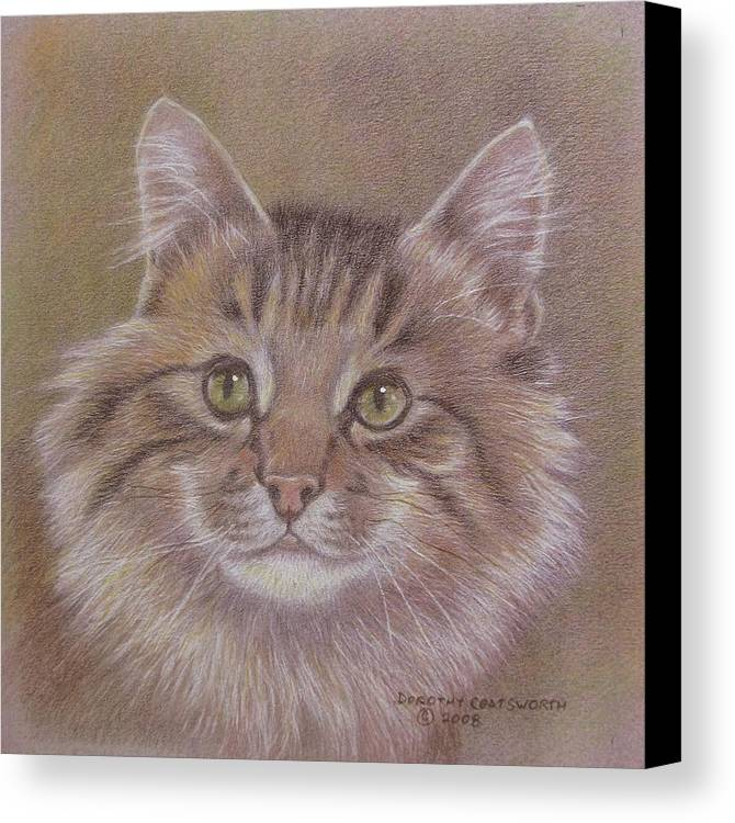 Canvas Print featuring the painting Maine Coon Cat by Dorothy Coatsworth