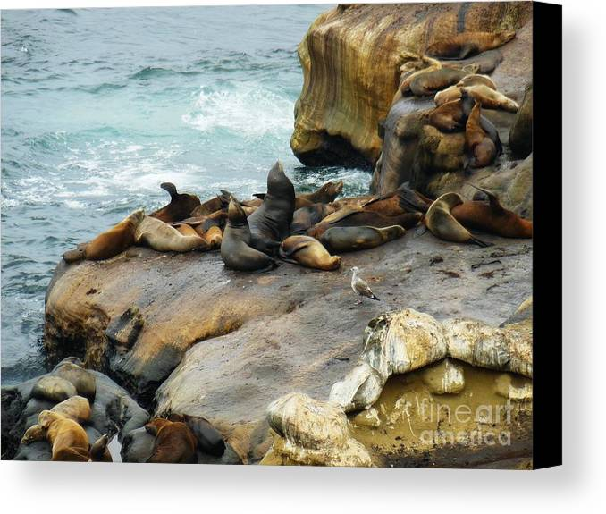 California Dreaming Canvas Print featuring the photograph California Dreaming by Mary Machare