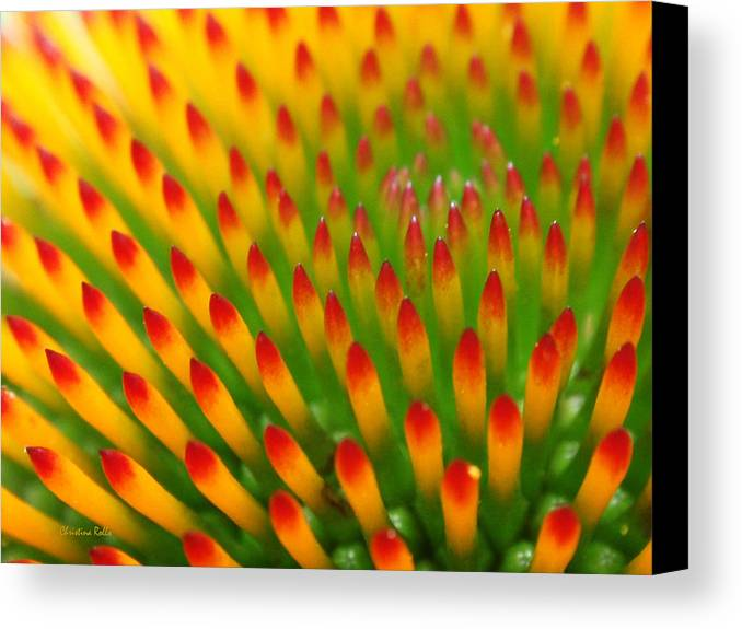 Coneflower Canvas Print featuring the photograph Deciphering Close by Christina Rollo