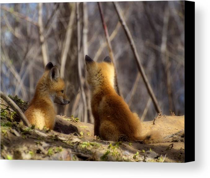 Kit Fox Canvas Print featuring the photograph Deep In Thought 1 by Thomas Young