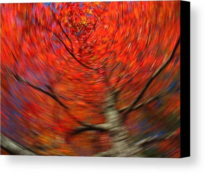 Intentional Camera Movement Canvas Print featuring the photograph Fall Tree Carousel by Juergen Roth