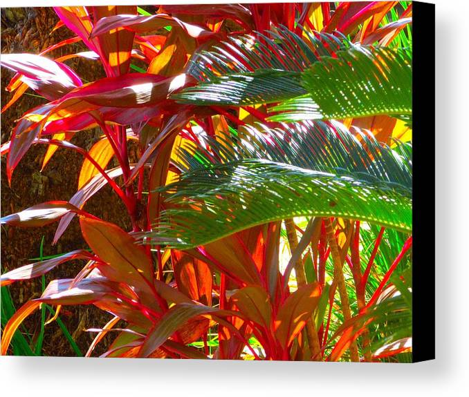 Landscape Plants Canvas Print featuring the photograph Highlights by Gayle Price Thomas