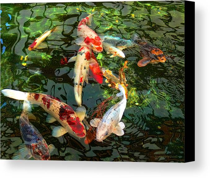 Japanese koi fish pond canvas print canvas art by jennie for Koi prints canvas