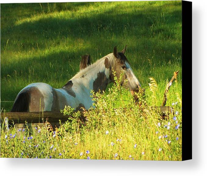 Horse Canvas Print featuring the photograph Meet Me At The Fence by Feva Fotos